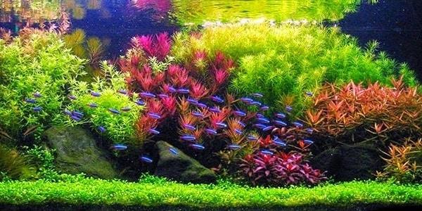 Acuario-Plantado-Holandes